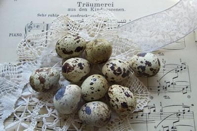 eggs, easter eggs, 2011, quail eggs, stock images free,