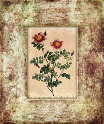 flower, floral, texture, textures, free, stock image, free image, free frames, frames free download, vintage frames, distressed frames, distressed frame, grunge frame,