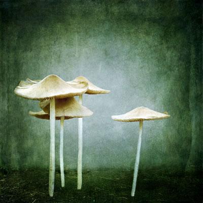 mushroom, mushrooms, white mushrooms, toadstools,