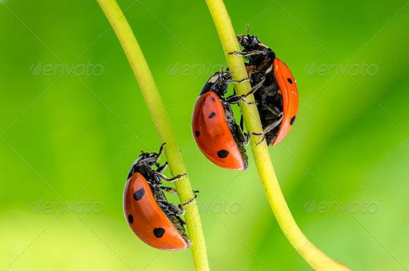 free stock image, ladybug stock image free